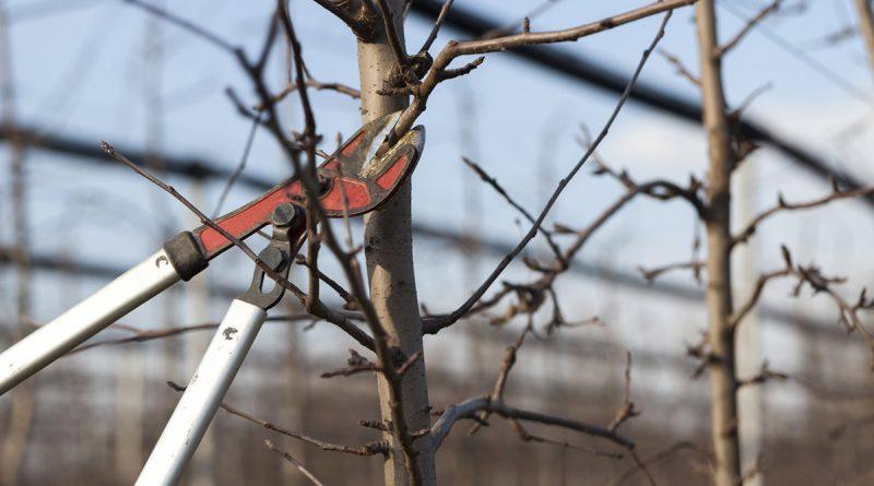 Jak przycinać drzewa i krzewy wiosną?